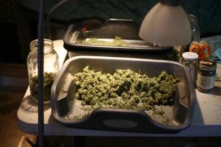 A trim tray.